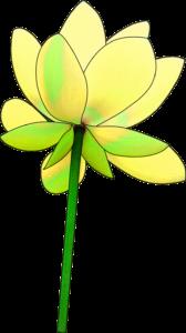 蓮ハス-黄色